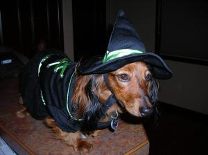 I am not a witch, I'm a cute dog! I just dressed as a witch for Halloween.